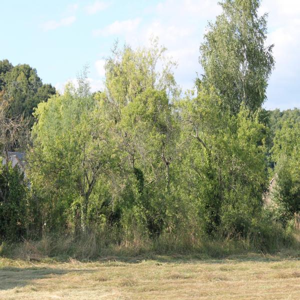 Offres de vente Terrain Mareil-sur-Loir 72200